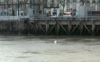 Incroyable : un frigidaire dans la Loire, le jour du lancement de Green Capitale !